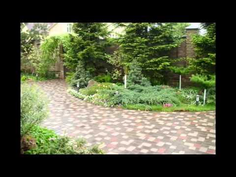 Ежевика садовая фото и описание сортов, видео выращивания