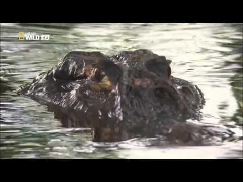 Природа Амазонки HD