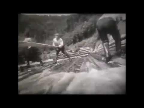 Карпаторусинська Нація: Бокораші. Сплавляня хащі у Карпатах  (Д⁄ф Карпаты, СССР)