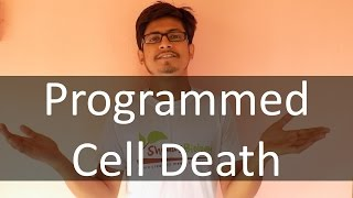 Programmed Cell Death (apoptosis)