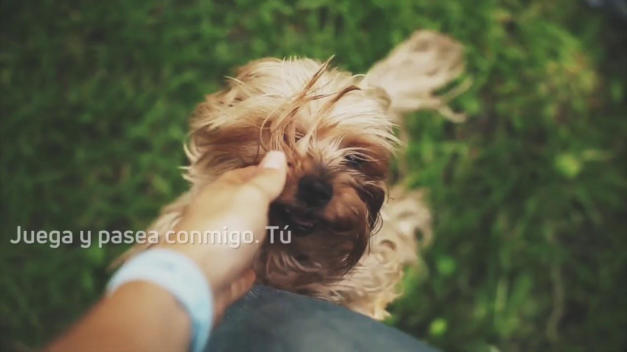 Lo que tu perro quiere que sepas