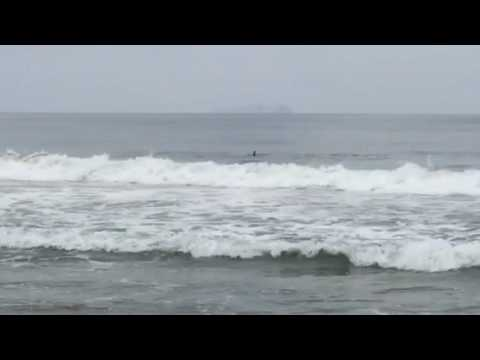 Dolphins riding waves, Imperial Beach, CA