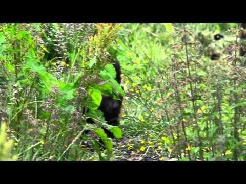 Highland Wildlife Park- Promo