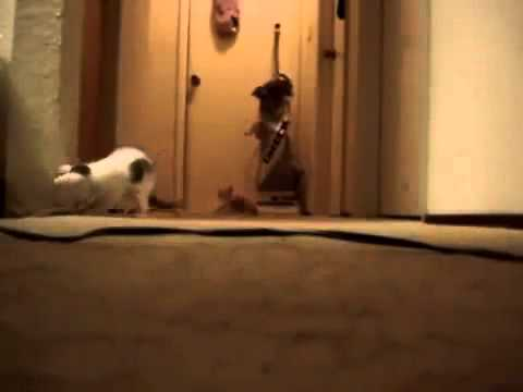 Cats Running From Vacuum Gif