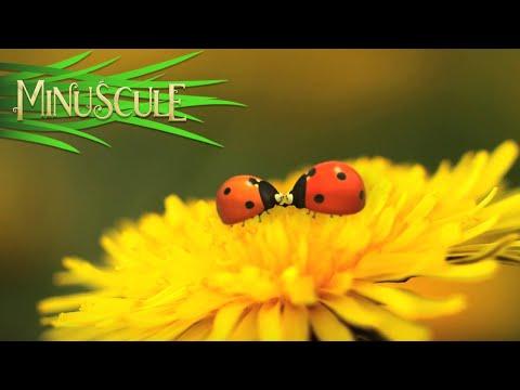 Minuscule - Night Of The Mandibles / La nuit des Mandibules