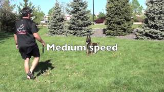 Dog Training Commands Very Fast.