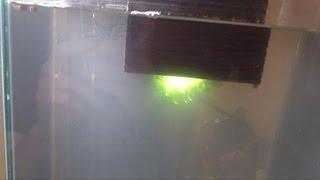 Agua turbia en acuario nuevo