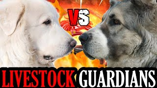 Great Pyrenees vs Central Asian Shepherd | Alabai vs Great Pyrenees | Powerful Dog? | Billa Boyka |