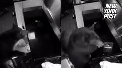 Bears break into pizza parlor to steal salami | New York Post