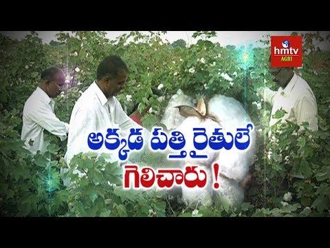 Raichur Cotton Farmers Success Story | SPLAT-PBW Gel | Pink Bollworm Management | hmtv Agri