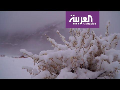 نشرة الرابعة | تعرف على الموجة القطبية التي ستؤثر على أجواء السعودية خلال الأيام القادمة  - نشر قبل 2 ساعة