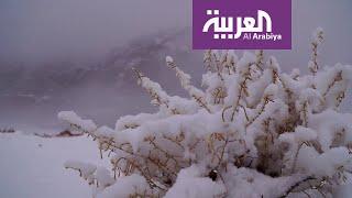 نشرة الرابعة | تعرف على الموجة القطبية التي ستؤثر على أجواء السعودية خلال الأيام القادمة