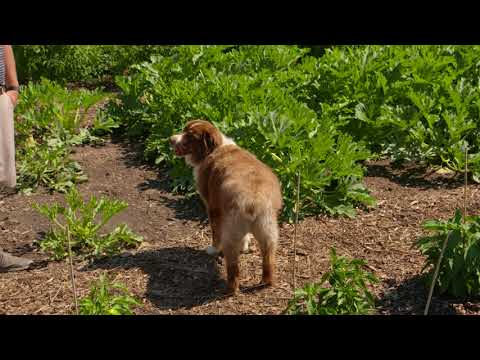 Southern Hills Country Club Vegetable Garden Tour