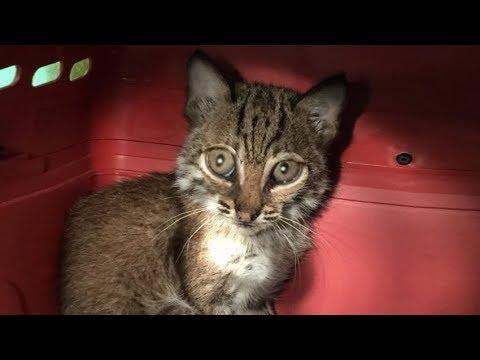 Водитель подобрал котёнка на за 2 октября