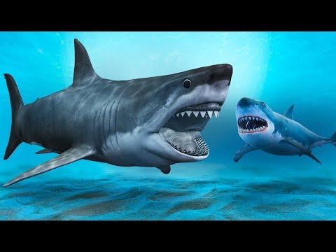 メガロドンよりも恐ろしいサメ