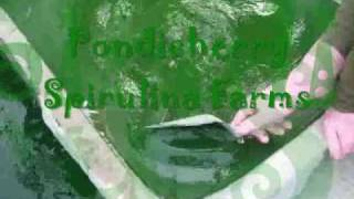 spirulina - Pondicherry Spirulina Farms - (Puducherry - India) Intro-2