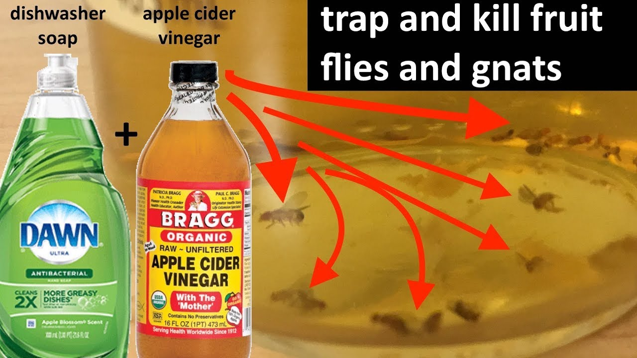 Tutorial: trapping and killing fruit flies and gnats at home