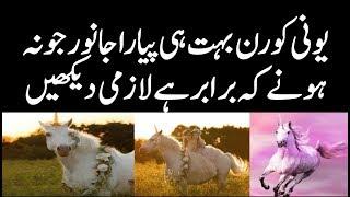 Ajeeb o Ghareeb Janwar Unicorn Bri Dilchasp Video | Unicorn History In Urdu