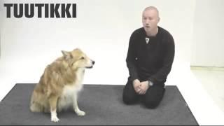 Человек имитирует собачий лай и наблюдает за реакцией собак