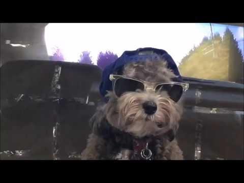 Car Poodle Dress Up Karaoke