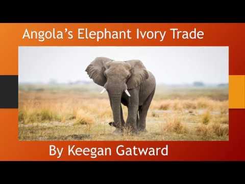 Angola's Elephant Ivory Trade