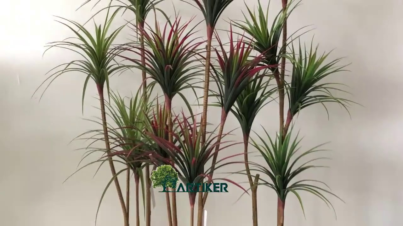 Chinese Evergreen Plant b2350 | Online Plant Shop |Wholesale Silk Plants Chinese Evergreen House