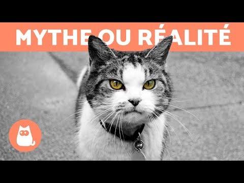 Les Chats Protègent Des Mauvais Esprits- MYTHE OU RÉALITÉ ?