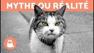 Les chats protègent des mauvais esprits MYTHE OU RÉALITÉ ?