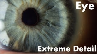 The Human Eye in Extreme Detail