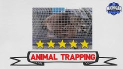 Michigan Wildlife Solutions- Animal Trapping
