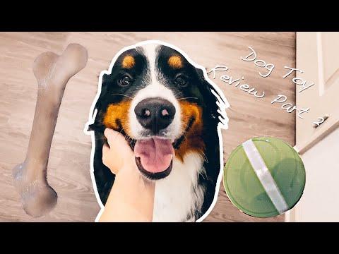 bernese-mountain-dog-reviews-dog-toys-|-part-2.-*asmr*