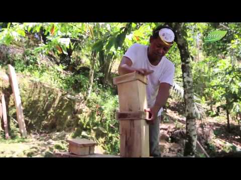 Lebah Trigona : Lebah Lokal Unggul Penghasil Propolis dan Madu