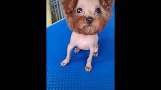 Pets love || Funny animals || Sen ơi mày cuồng Tây Du Kí thì liên quan gì đến tao chứ?