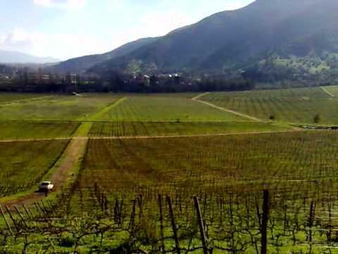 Viñedo Piedmont. Venta en Chile