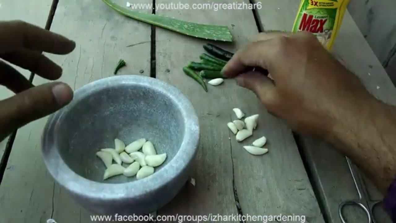 How to Make Organic Pesticide | Natural Pesticides for Ants | Ghar ...