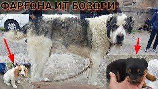 ФАРҒОНА ИТ БОЗОРИ  | Ферганский собачий рынок 2019