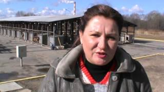 Віцебскі прытулак для бяздомных жывёл мае патрэбу ў дапамозе