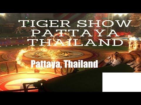 sriracha-tiger-zoo:--tiger-show-pattaya,-thailand