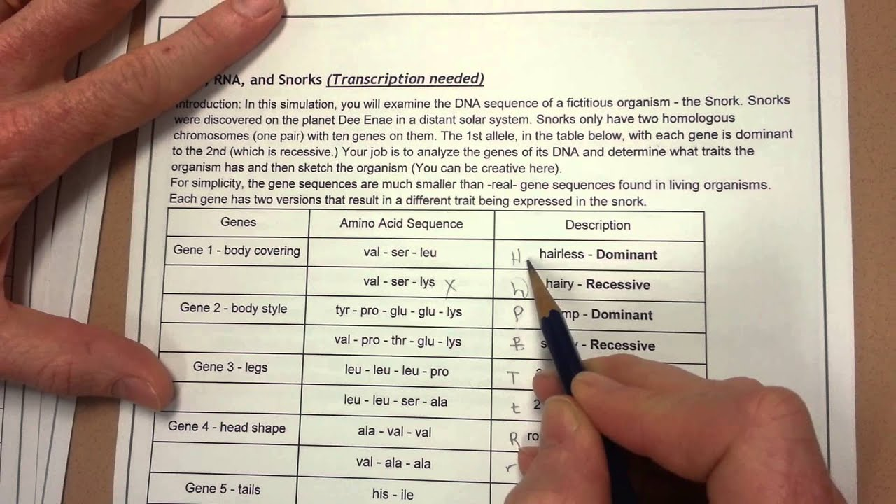 32 Dna Rna And Snorks Worksheet Answers - Free Worksheet ...