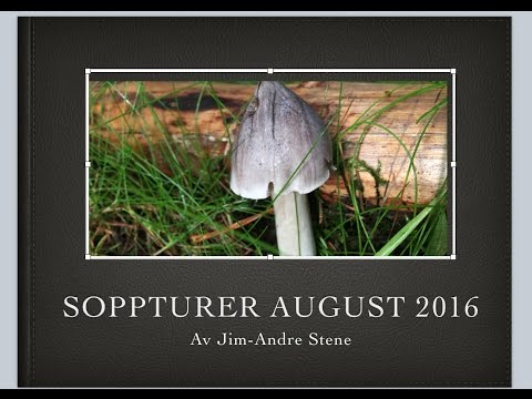 =6= Soppturer August 2016 - 51 Arter