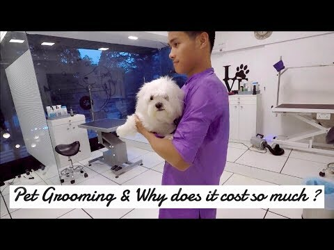 Maltese Grooming | Fluffy Puppy | Bangalore