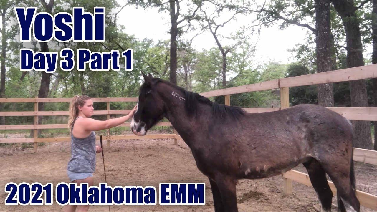 Yoshi Day 3 (Part 1) | 2021 Oklahoma Extreme Mustang Makeover Ep. 6
