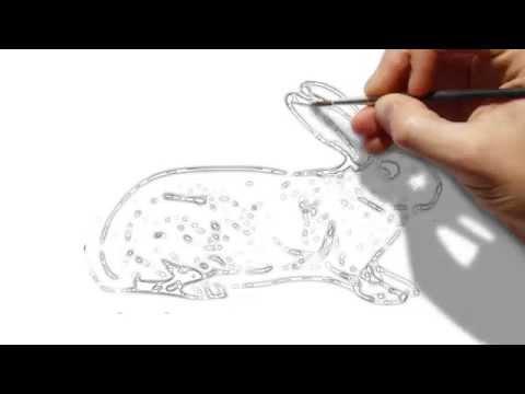 วาดรูปกระต่าย  Draw a rabbit