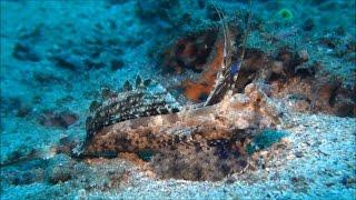 Самые красивые обитатели морей и океанов очень красивое видео с красивой музыкой