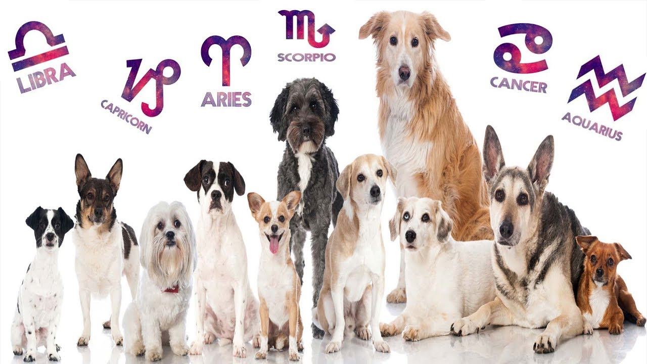 Perfect Dog For You Based On Your Zodiac Sign