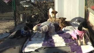 Приют для бездомных собак в Кишиневе