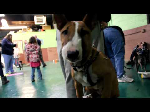 PUPPY KINDERGARTEN Best Friends Dog Training