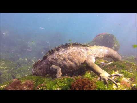 Galapagos diving - January 2017