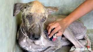 This Rescued Street Dog Amazing Transformation