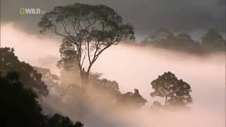 Животные мира Таиланд Очаг биоразнообразия Утренний крик Верхний ярус Тишина природы Ночная жизнь